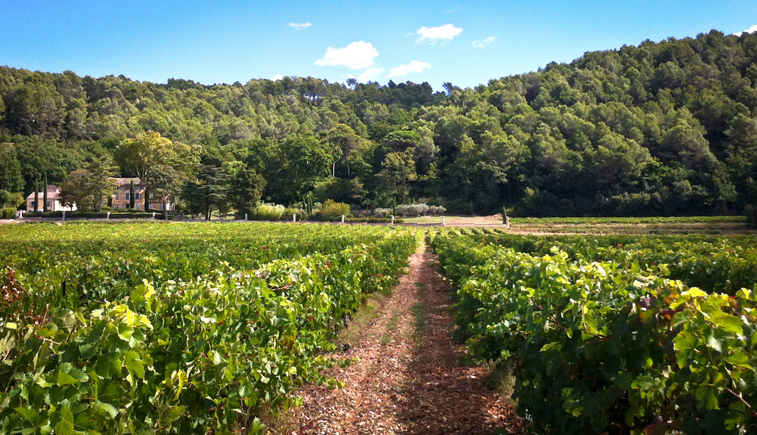 Best of Provence Wine, Small Group Tour